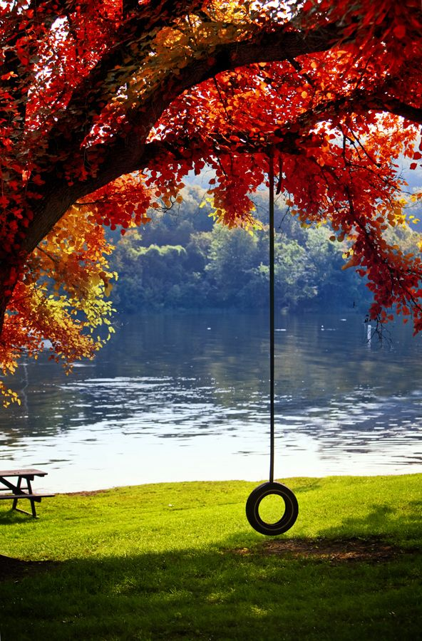 End of Summer by Isac Goulart, via 500px: End Of Summer, Summer Day, Tired Swings, Beautiful, Places, Backyard, Trees Swings, Fall Weather, Back Yard