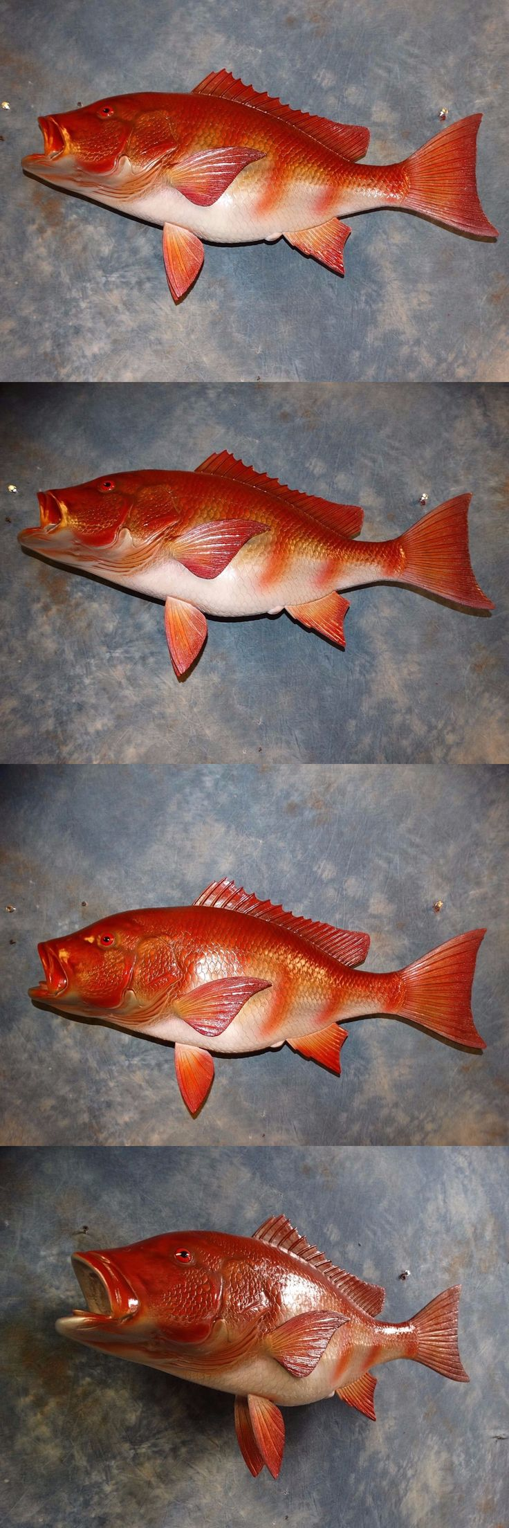 Fish 71127: 32 Brand New Two Sided Red Snapper Quality Reproduction Fish Taxidermy Mount -> BUY IT NOW ONLY: $395 on eBay!