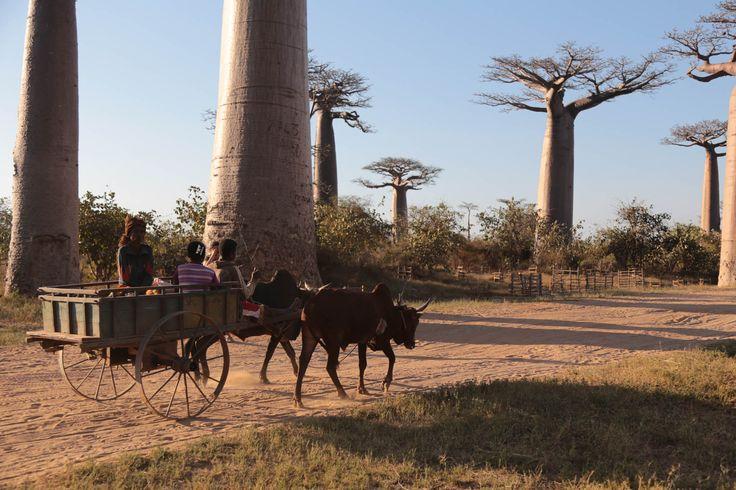 Women and horse drawn cart in Madagasgar taken with Canon EOS 6D DSLR camera  https://www.camerasdirect.com.au/digital-cameras/digital-slr-cameras/canon-dslr-cameras