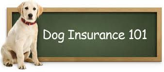 http://www.moneylion.co.uk/insurancequotes/lifestyle/cheappetinsurancecomparison Pet Insurance