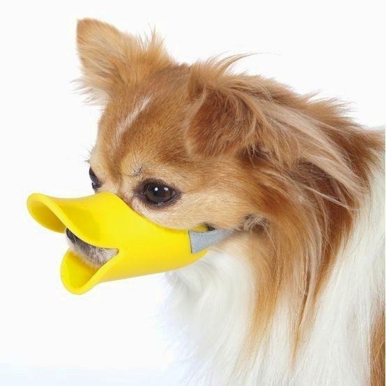 Картинки по запросу породы маленьких собак картинки