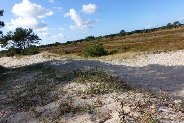 In der Dünenheide auf Hiddensee