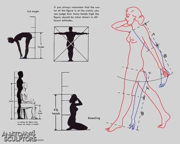 from Anatomy for Sculptors site | Anatomy - Human | Pinterest | Drawings, Anatomy and Art