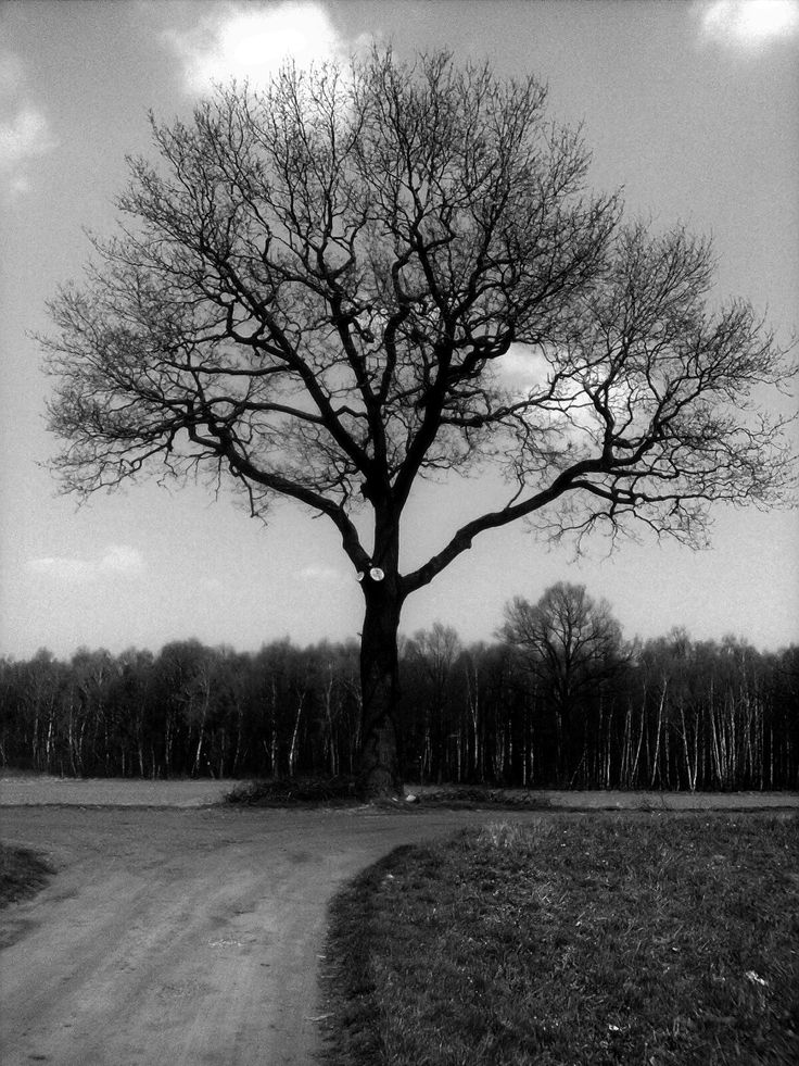 Black and white photo. It's little sad I think.
