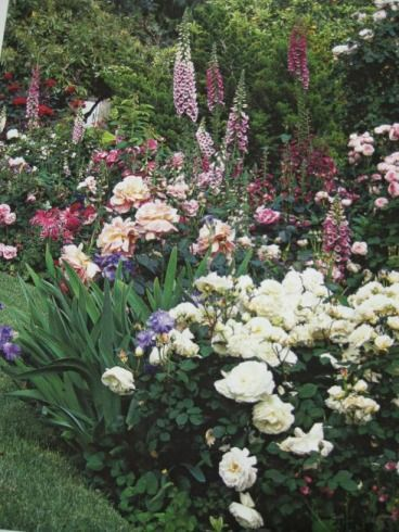I've already got peonies -- maybe some foxglove and irises in the side bed?