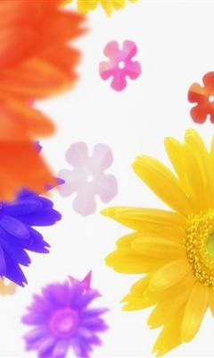 240x400 hd Colorful flowers desktop wallpaper mobile phone wallpaper