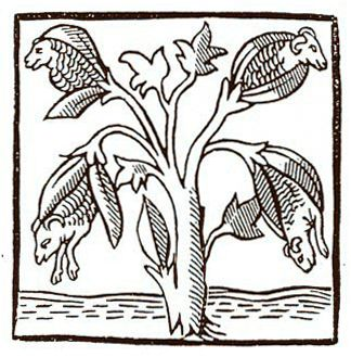 "This might have been cotton? ""Tree wool"" Woodcut fifteenth century.  [India] ""there are trees growing in the wild, the fruit is a better and more beautiful than sheep wool. Indian weave wool clothing with this tree""  Herodotus, Histories, III, 106  Rues de Pondichéry - Fragments d'histoire - département d'Ethnologie et d'Anthropologie de l'université de la Réunion"