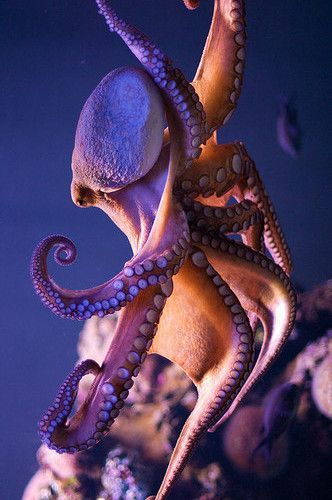 Octopus dance by Morten Brekkevold