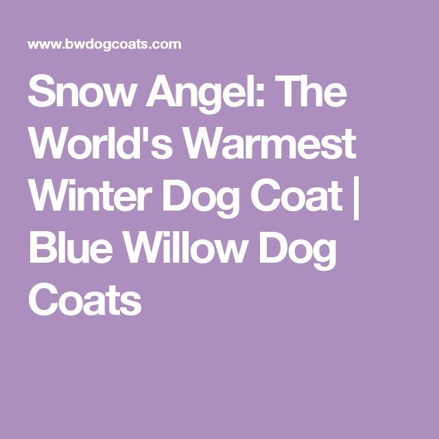 Snow Angel: The World's Warmest Winter Dog Coat | Blue Willow Dog Coats
