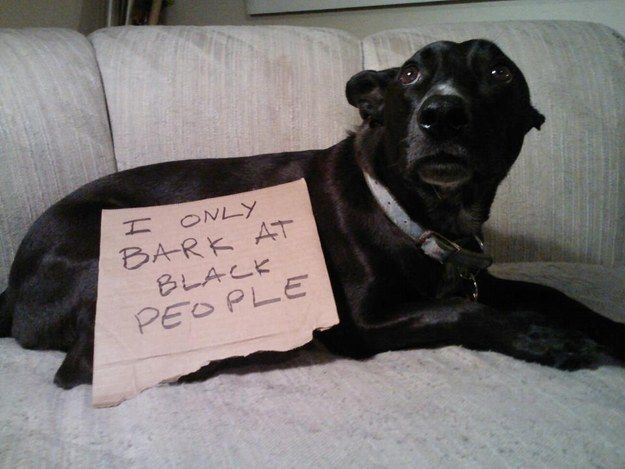 The owner of this racist dog. | 23 People Who Sadly Passed Away From Embarrassment