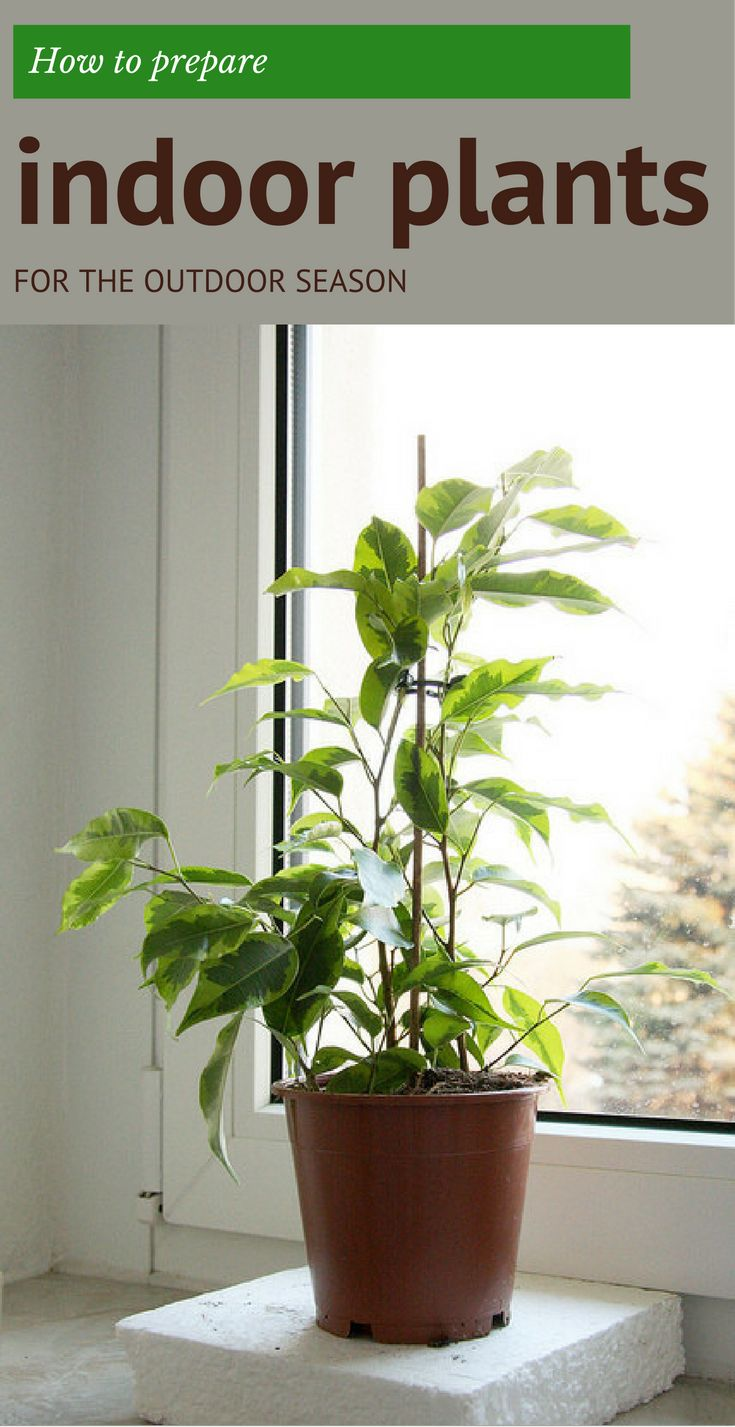 39 Best Images About Gardens Houseplants On Pinterest