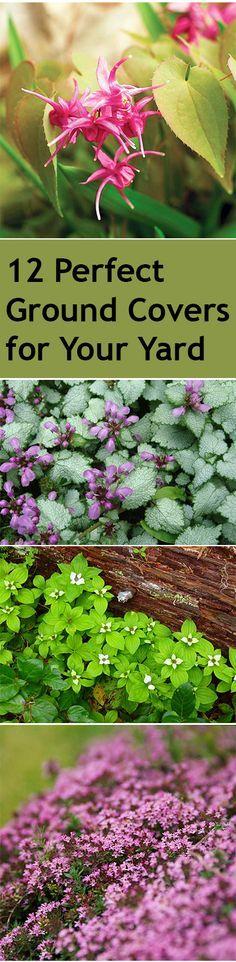 Ground cover plants, garden ground covers, popular pin, gardening, gardening…