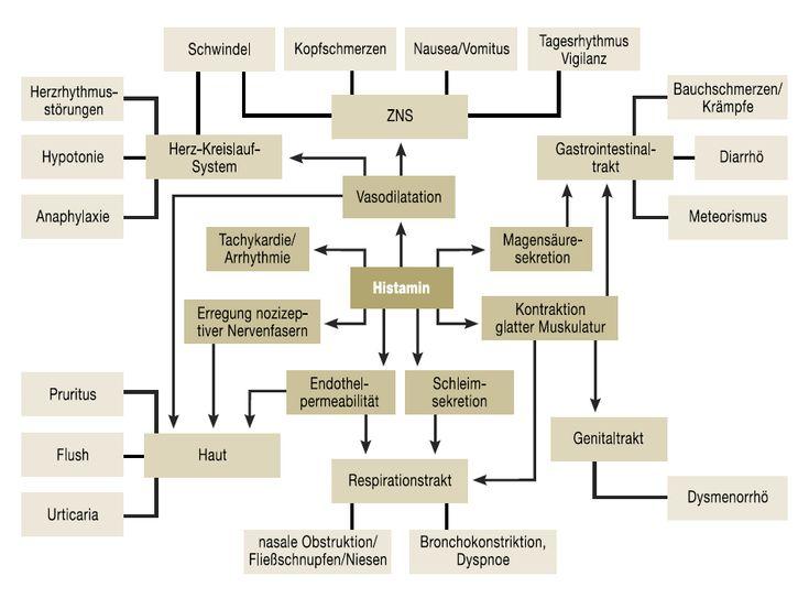 Da Histamin ein wichtiger Botenstoff im gesamten Körper ist, nämlich im Zentralnervensystem, im Herz-Kreislaufsystem, in der Haut, in den Atemwegen, im Uterus, im Knochenmark und im Gastrointestinaltrakt, können die Symptome einer Histaminose unglaublich vielfältig sein. Dies macht es nicht nur…
