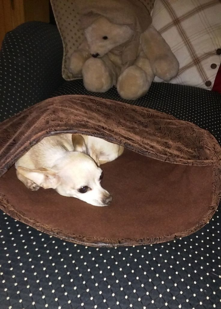 your keeping bed beds cosy tips bedding puppy feature the labrador advice for and