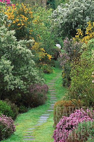 GRASS_PATH_WITH_STEPPING_STONES