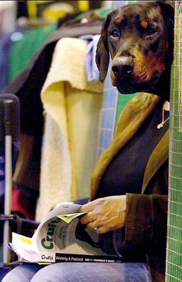 Cachorro parece estar lendo o livro (Foto: Reprodução)