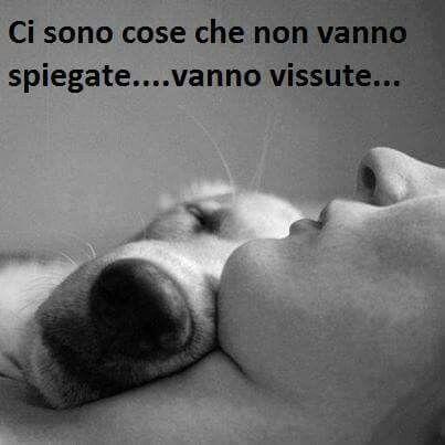 Chi non ha un cane non sa cosa è il vero amore.