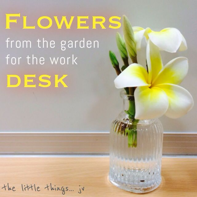 it's the little things… like fresh flowers from your own garden for your desk at work. - joey v