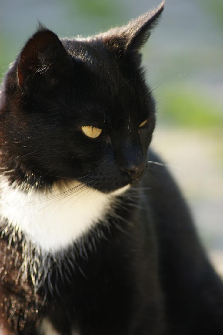 Elvis: Cats, Dogs, Elvis, Animal