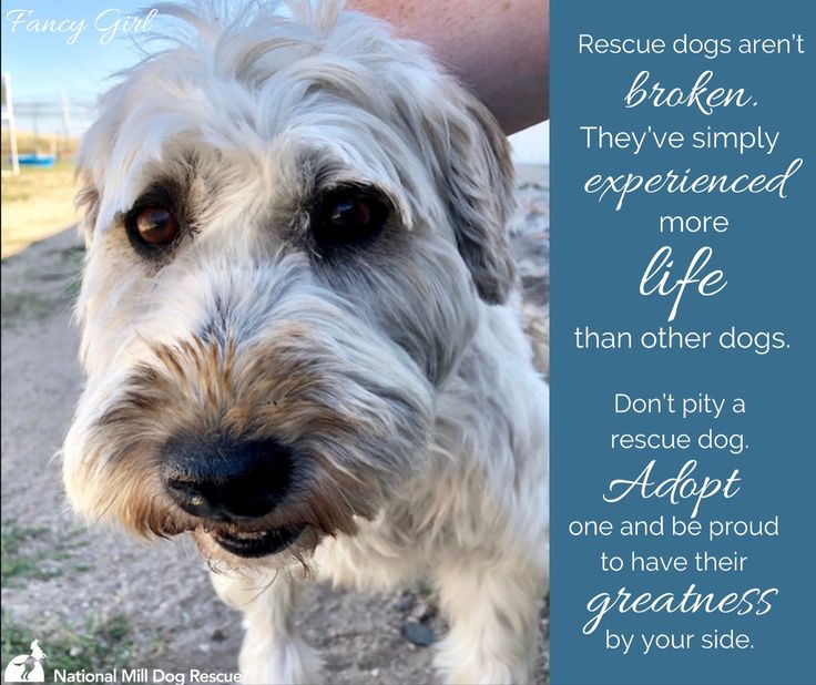 Pin by National Mill Dog Rescue on NMDR Dog Posters in