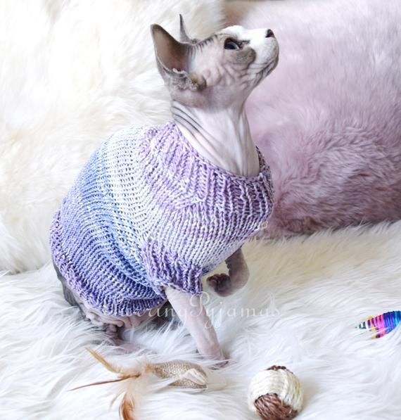 Caring For A Sphynx Kitten Learn And Apply Sphynx Cat Cat Care Kitten