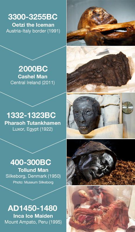 Infographic - remains of early humans - what a boon for science to have this treasure from which to study and learn: Oetizi, Cashel, King Tutankhamen, Tollund, and the Inca Ice Maiden