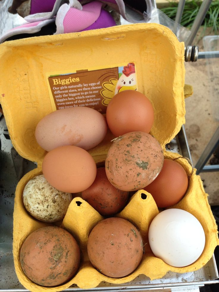 Some of the eggs from our first set of organic birds #chickens  #keepingchickens #happyhens