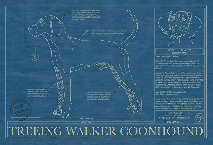 Rendered in the original format of a working blueprint, this unique wall art features the Treeing Walker Coonhound drawn in detail along with factual information that makes that breed special. This unique blueprint is the perfect wall art or gift for Treeing Walker Coonhound lovers and owners. Museum quality print in archival acid free matte board. All framing is 100% ...