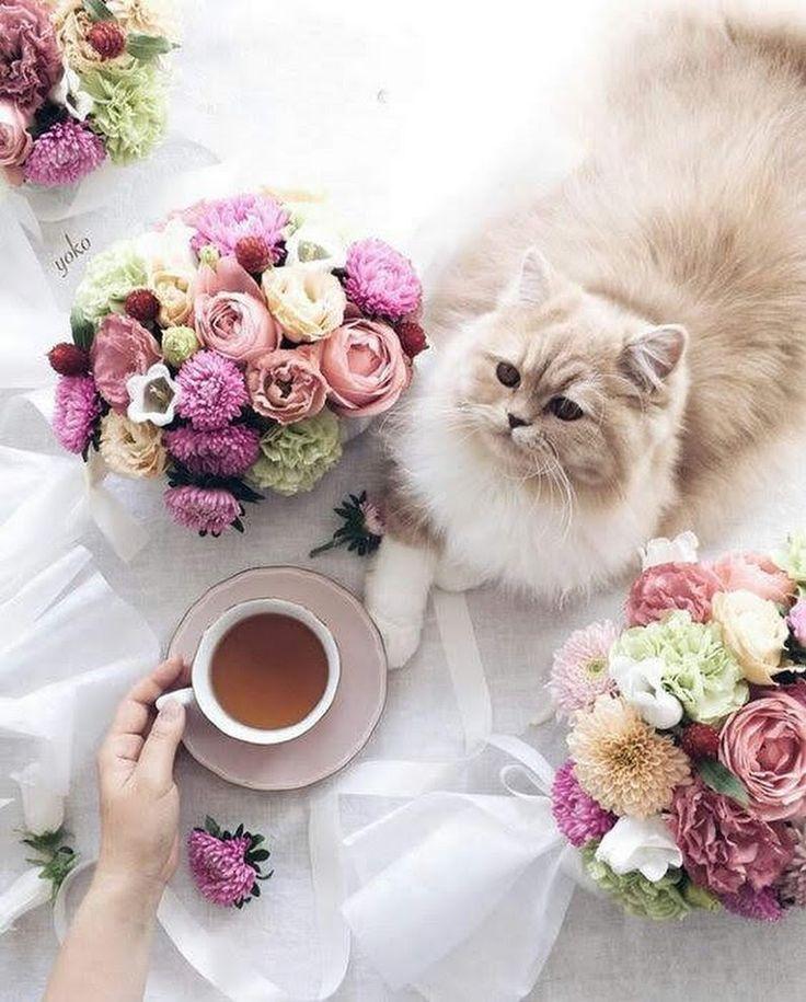 будет котенок доброе утро фото особая
