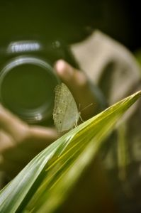 Want to be a freelance photographer?