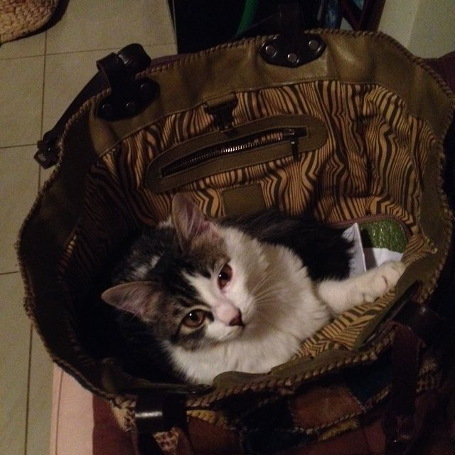 Sleeping in a bag!