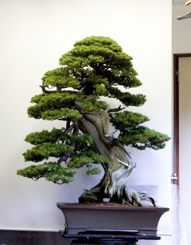 12420 best images about Bonsai on Pinterest | Bonsai trees ...