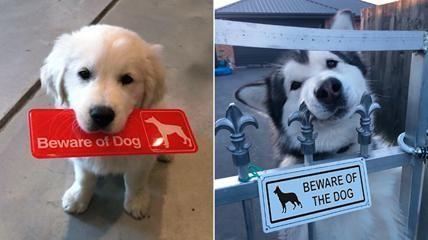 """""""Attenti al cane""""... scherzo, ovviamente!"""
