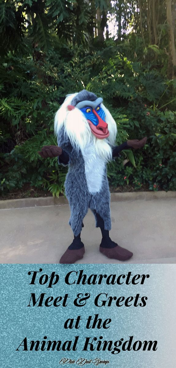 Favorite Character Meet & Greets at the Animal Kingdom, Walt Disney World, WDW Disney tips, Florida Travel