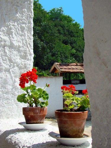 Geranium on the veranda of a farmhouse, Szomolya Hungary