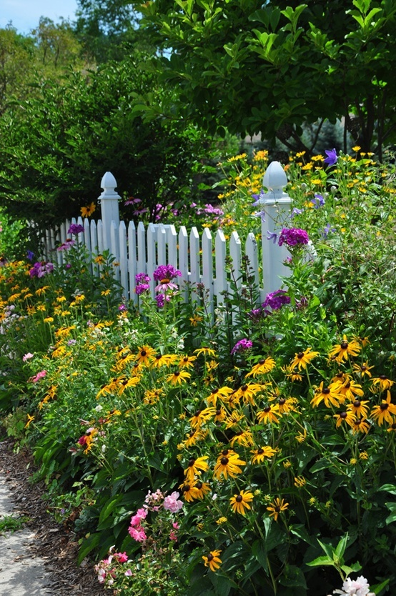 Phlox And Brown Eyed Susan White Fence!
