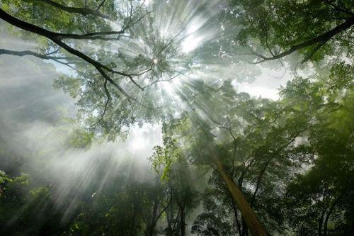 Xシリーズ写真展 作品紹介 FUJIFILM X-T1  XF10-24mmF4 Xシリーズ写真展2017秋より田中雄一さんの作品をご紹介 神々が宿る森 撮影地は私の生まれ故郷の養老町 養老の滝は毎年7月1日に滝開きの行事が行われますこの写真はその行事の際に撮影したもの 朝もやに見えますが実は護摩木をもした時の煙が辺り一面に立ち込めたものです 見上げた景色の神々しさに思わずシャッターを切りましたそんな瞬間でもFUJINON XF10-24mmズームは的確に応えてくれました . Xシリーズ写真展 2017秋福岡会場 日時12月15日(金)12月20日(水)10:0018:30 会場富士フイルムフォトサロン福岡 福岡市博多区住吉3-1-1 富士フイルム福岡ビル1F . 今後の開催日程 2018年1月5日(金)1月18日(木)富士フイルム大阪サービスステーション . #富士フイルム #FUJIFILM #xシリーズ #fujifilm_xseries #Xシリーズ写真展 #xt1 #xf1024 via Fujifilm on Instagram - #photographer…