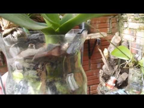 Minha UTI para as orquídeas - YouTube