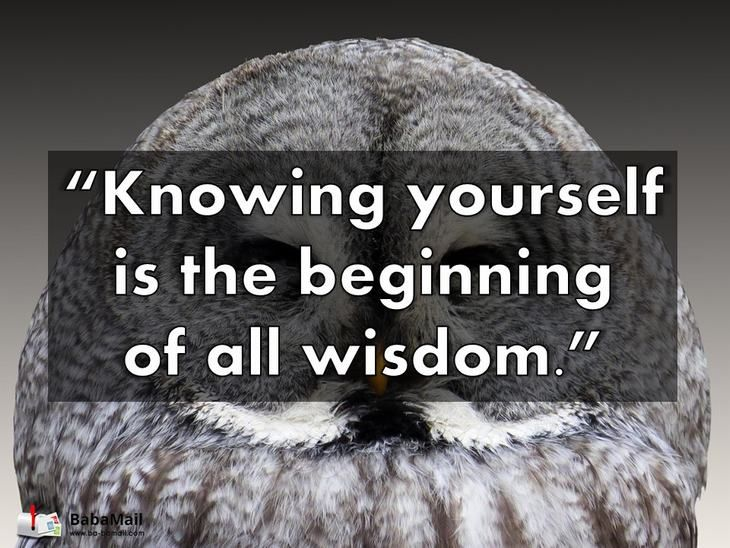 Inspirational Quotes Aristotle By Ibbds: 81 Best A Truth Is A Truth Images On Pinterest
