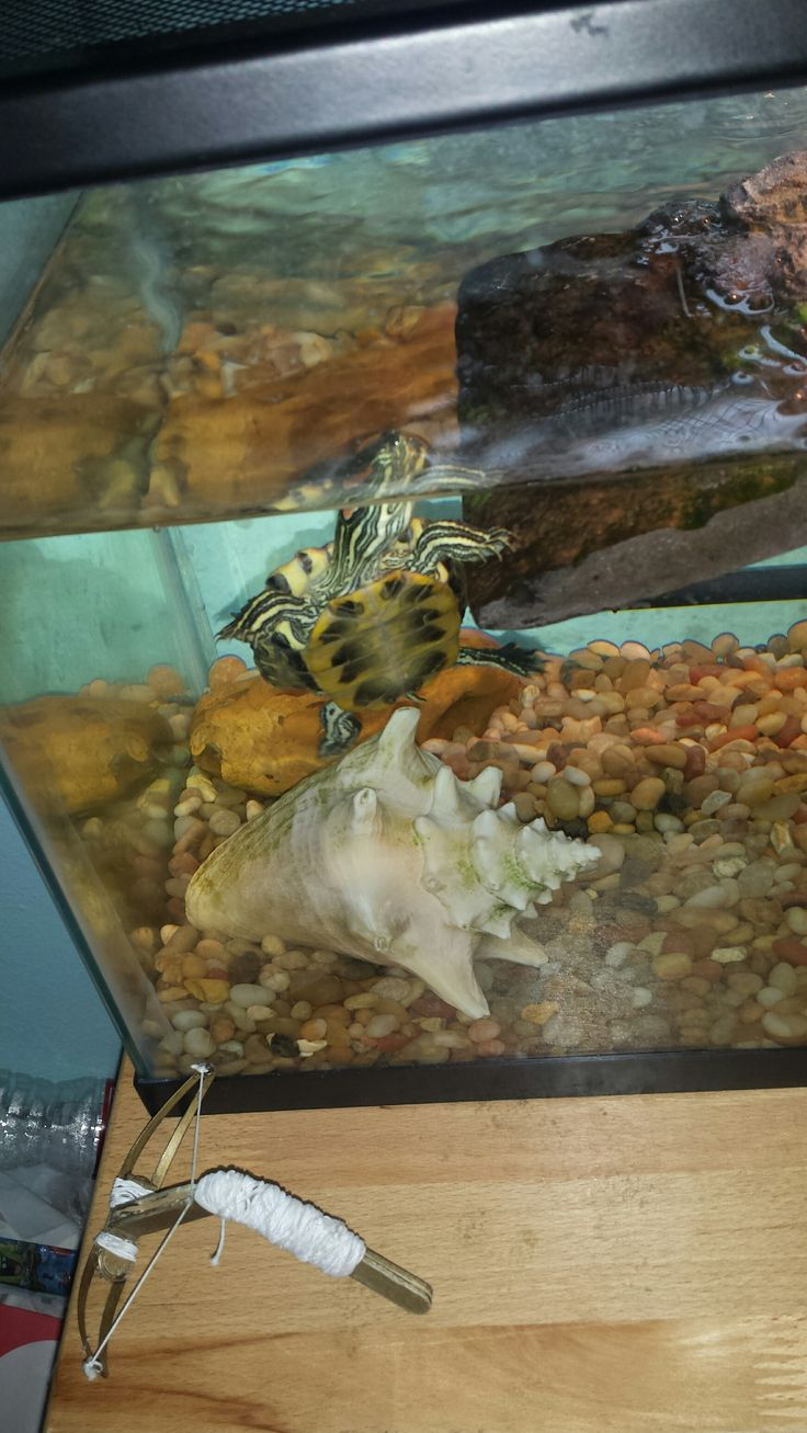 82 Best Images About Res On Pinterest Box Turtles Exo And Aquatic Turtles