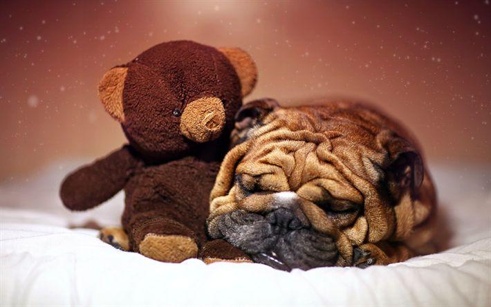 Download imagens Shar pei, filhote de cachorro, cachorros, animais fofos, urso de pelúcia