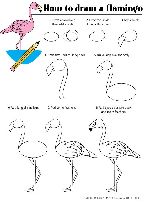 I'm headed to Florida and I hope to see some flamingos. Follow my step-by-step guide to drawing your own flamingos