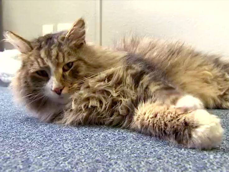 Missing Cat Found 16 Months Later in Nearby Pet Food Warehouse: 'I Can't Believe He's So Porky' http://www.people.com/article/missing-cat-clive-found-nottinghamshire-pet-food-warehouse