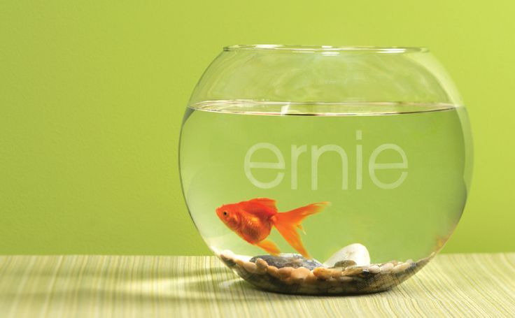 Glass Etched fish bowl idea from Silhouette - use Silhouette glass etching kit to add a goldfish's name right to the outside of the bowl!