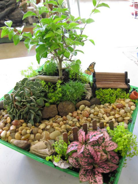 Miniature Indoor Gardens Fairy Gardens  Indoor Fairy Gardens  Phelan ...