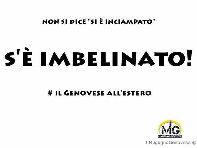 Si è #imbelinato. #ilgenoveseallestero #belin #ilmugugnogenovese #genova #liguria #genovese #zeneise
