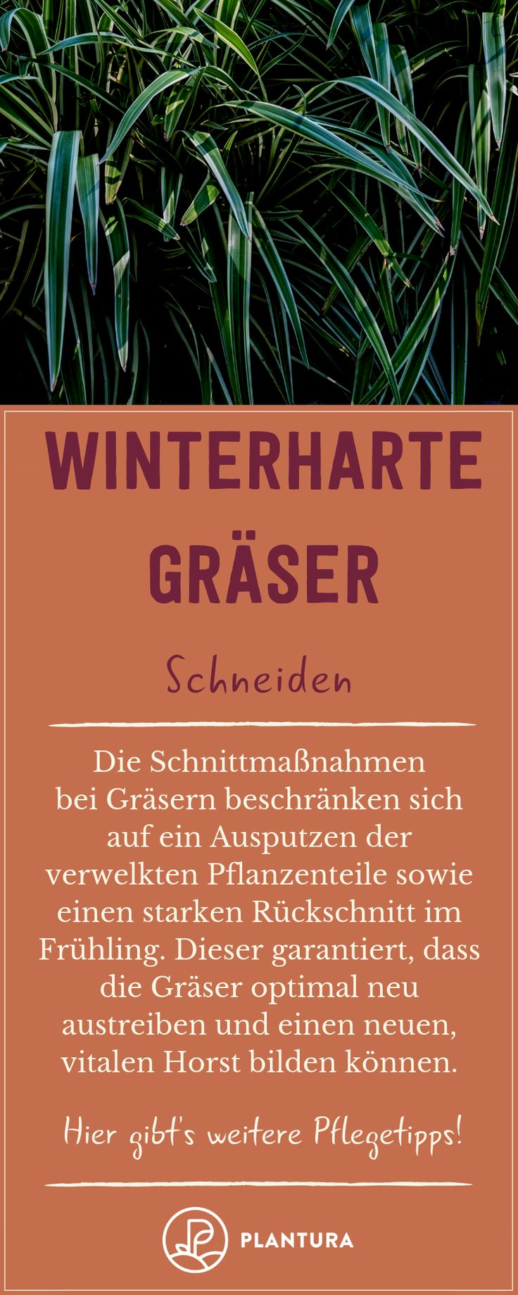 Winterharte Gru00e4ser: Auswahl & Vielfalt Gru00…