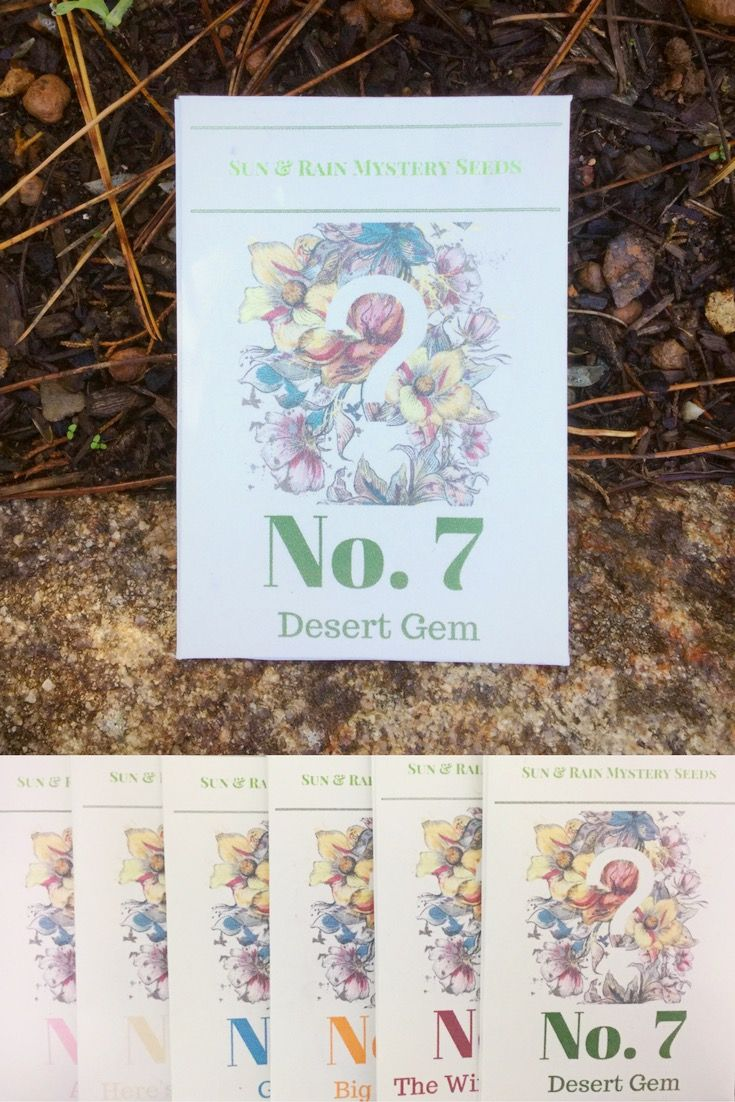 No.7 is in season now! Stunning Australian wildflower inside! Buy now as a gorgeous gift or a gift to you! Winter July gardening Australia Etsy buyable pins