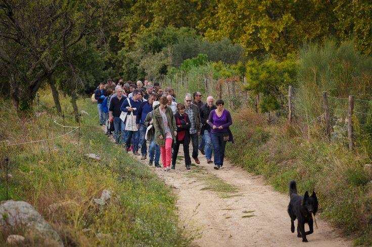 Ot, uno de los perros de Celler Can Torres, encabeza la comitiva formada por los promotores de la bodega ecológica y clientes de Triodos Bank para una pequeña excursión por la finca.