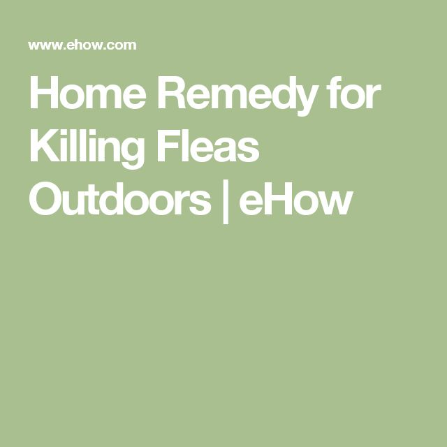 Home Remedy for Killing Fleas Outdoors | eHow